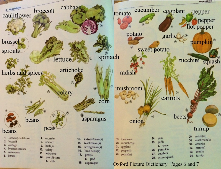 English vocabulary vegetable pictures and words
